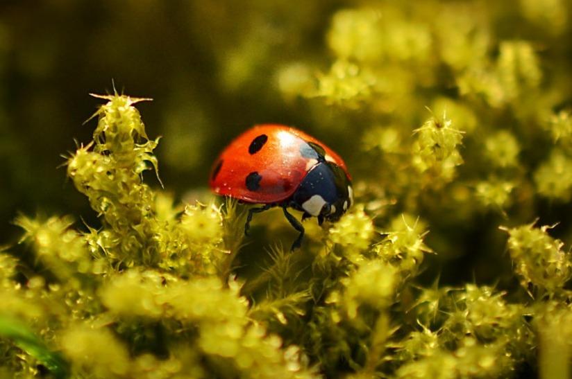 Bug_Dance_1