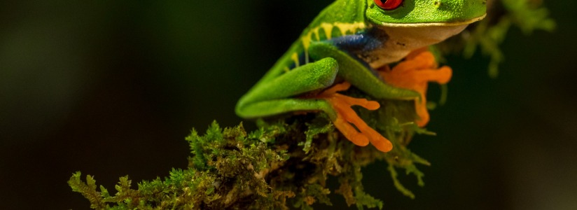 Frog_zdenek-machacek-HYTwWSE5ztw-unsplash