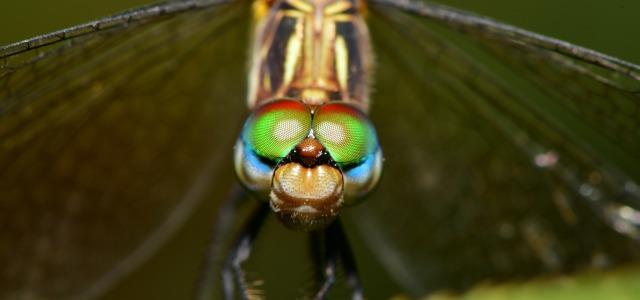 libelle_dragonfly_juan-pablo-mascanfroni-6OU9Pft7kkU-unsplash